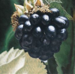 Blackberries I, 1999, OOC, 16 x 16 in