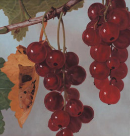 Currants II, 2002, OOC, 32 x 30 in