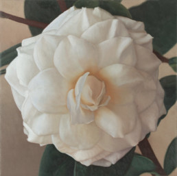 Kamelie III, 2001, OOC, 40 x 40 cm