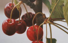 Cherries IV, 2004, OOC, 34 x 55 in