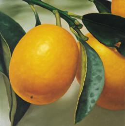 Kumquats II, 1999, OOC, 40 x 40 cm