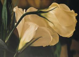Lysanthus, 2002, OOC, 120 x 165 cm