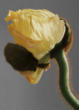 Poppy III, 2006, OOC 34 x 26 in