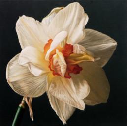 Narzisse II, 1998, OOC, 40 x 40 cm