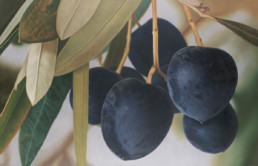 Olives II, 2003, OOC, 34 x 55 in