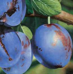 Plums, 1998, OOC, 16 x 16 in