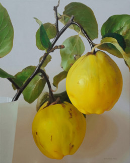Quinces II, 2012, OOC, 35 x 28 in