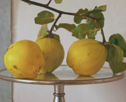 Quinces, 2011, OOC, 35 x 43 in