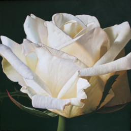 Rose V, 1998, OOC, 39 x 39 in