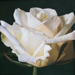 ROSE V, 1998, OOC, 100 x 100 cm