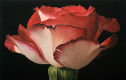 Rose XLII, 2004, OOC, 34 x 55 in