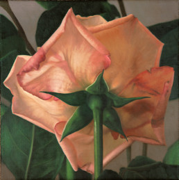Rose XXXI, 2001, OOC, 16 x 16 in