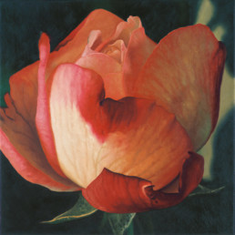 Rose XX, 2000, OOC, 22 x 22 in
