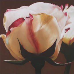 Rose XXXIX, 2003, Oil on wood, 16 x 16 in