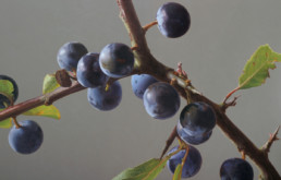 Sloes III, 2006, OOC 34 x 55 in