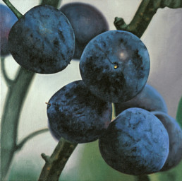 Sloes, 1999, OOC, 16 x 16 in