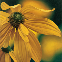 Coneflower, 1997, OOC, 16 x 16 in
