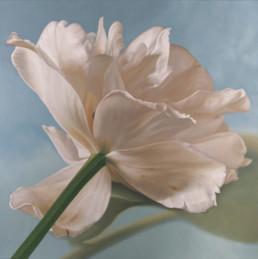Tulpe II, 2003, OOC, 100 x 100 cm