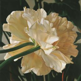 Tulpen I, 2000, OOC, 145 x 145 cm