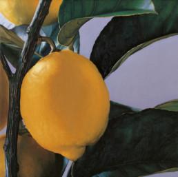 Zitronen II, 1998, OOC, 40 x 40 cm