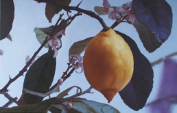 Citron IV, 2002, OOC, 34 x 55 in