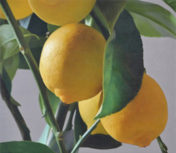 Citrons VI, 2014, OOC, 26 x 30 in