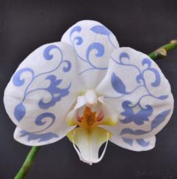 Orchidee, 2019, OOC, 70 x 70 cm