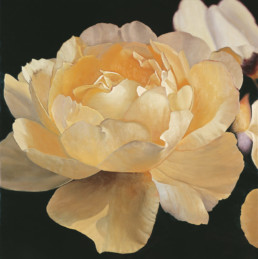 Rose III, 1998, OOC, 39 x 39 in
