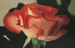 Rose XXXVII, 2003, OOC, 34 x 55 in